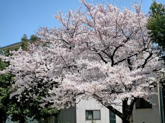 お花見公園1.jpg