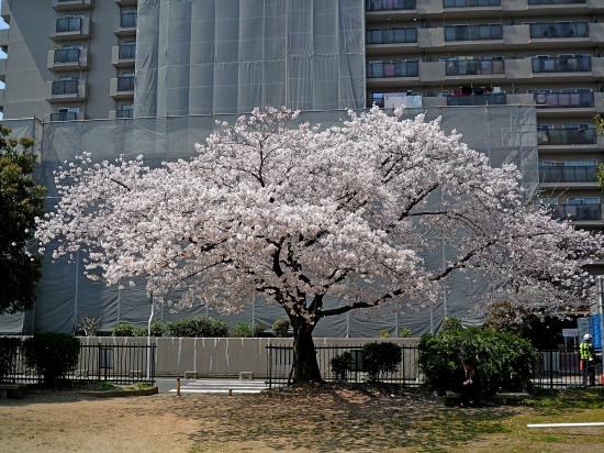 お花見公園2.jpg