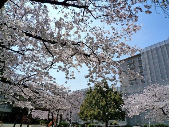 お花見公園3.jpg