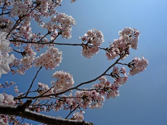 お花見公園4.jpg