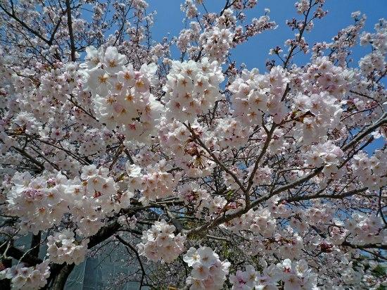 お花見公園5.jpg