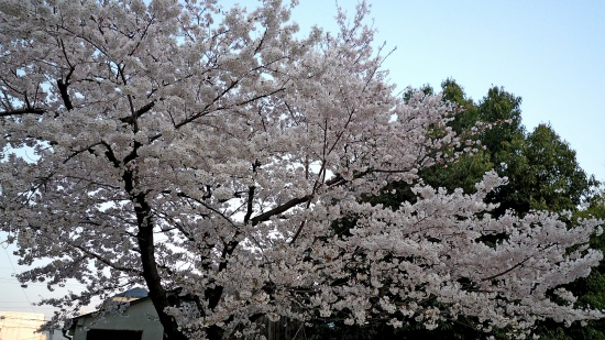 お花見公園Ⅱ-1.jpg