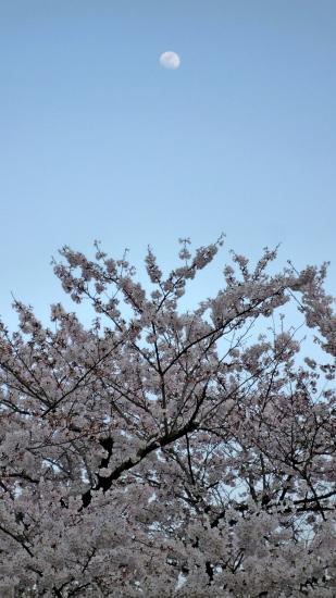 お花見公園Ⅱ-2.jpg