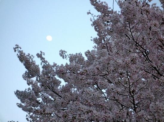 お花見公園Ⅱ-3.jpg