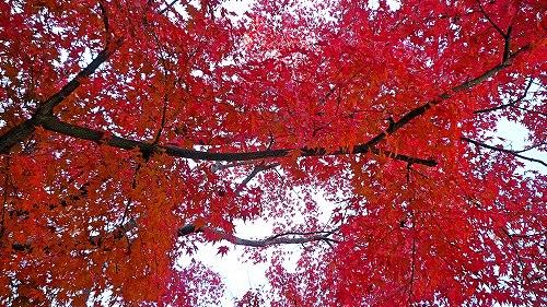 紅葉10.jpg